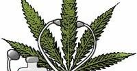 Cannabis terapeutica: tutto bene ministra Lorenzin?