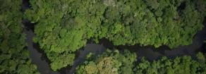 Brasile: i golpisti all'assalto dell'Amazzonia. Il neoliberismo minaccia il polmone del pianeta