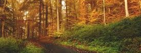 Ambiente, Acerbo: «No al nuovo testo unico forestale voluto dal Pd»