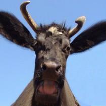 """Volano bufale/1. Tito Boeri e """"l'impossibile"""" abrogazione della Legge Fornero."""