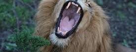 Agcom dà ragione alla Sinistra: ora un venerdì da leoni per riequilibrare penalizzazione in tv